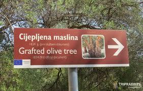 lun olive gardens sight slika u slideru
