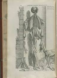 Page 192 of Andreas Vesaliusu0027 De corporis humani fabrica libri septem  featuring the illustrated