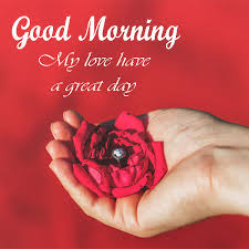 good morning my love wishes with flower