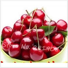 Cherry Tree Harvest Season  Harvesting Rainier Cherries Fruits When Do Cherry Trees Bear Fruit