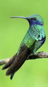live wallpaper hummingbird 10 02 screenshot 1