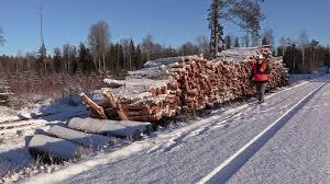 Walking Logs Lumberjack With Rope And Ax Walking Near Pile Of Logs Stock Video