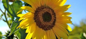 we also need to look at shade requirements and panion planting for a great summer garden