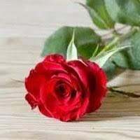 Iris Dillon Obituary - Death Notice and Service Information