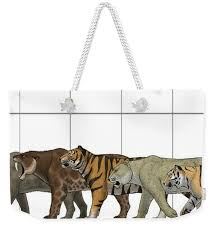 Tote Bag Size Chart Big Felines Size Chart Weekender Tote Bag