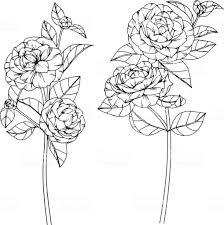 椿の花は白い背景にラインアートと図面とスケッチ いたずら書きの