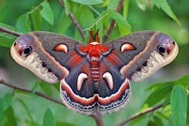 Image result for moth