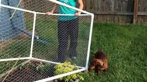 diy pvc garden fence fence ideas