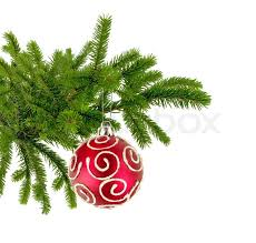 Decorating Christmas Tree With Balls Extraordinary Christmas Tree Branch With Red Decorate Ball Isolated On White