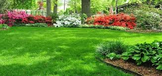 Healthy Grass and Trees All Summer Long