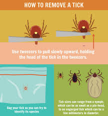 Cdc Tick Identification Chart Precautions To Avoid Tick Bites Fix Com