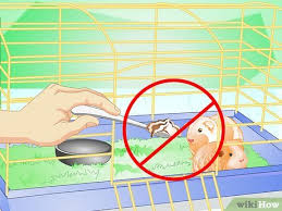 your guinea pig comfortable in its cage