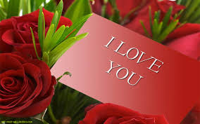 red roses hd wallpaper flowers wallpapers