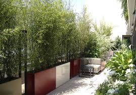 Bambou Archives Pivoine Etc