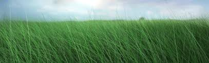 green grass field animated. Swaying Field Grass Green Animated