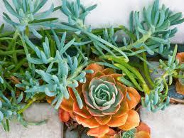 Succulent Growing Tips