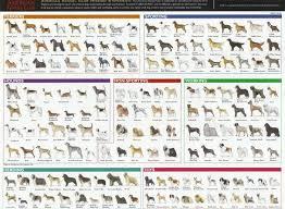 Dog Breed Classifications Pics Pets Nigeria Dog