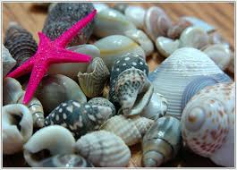 sea shells collection the stylish handmade home decor sea shell collections philippine news