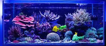 Best 60 Gallon Aquarium Reviews And Guide Setup Ideas Top