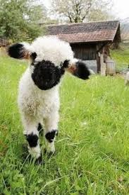real baby farm animals. Contemporary Baby Oh Hai With Real Baby Farm Animals E