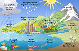 effects of global warming process paper sample and examples climate change