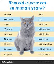 Age Of A Cat Chart Pet Age Concept Comparison Chart Of Cat And Human Years As