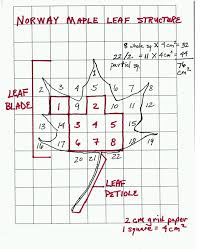 Surface Area of a Leaf Teacher Sheet - Science NetLinks