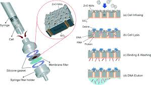recent developments in nanowires for bio applications from 1 schematic of the direct assembly of the nanowire decorated multifunctional membrane a commercial handheld syringe filter holder for mechanical cell