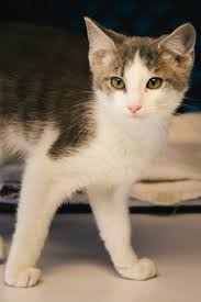 Q: Why should I microchip my indoor cat?