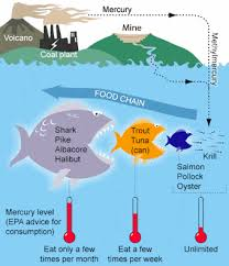 Tuna Fish Size Chart Mercury Levels In Fish Chart And Information Disabled World