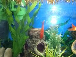 Barabao: come allestire un acquario per pesci rossi