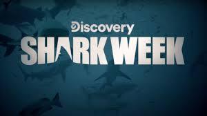 Shark Week 2021: How to watch, live ...