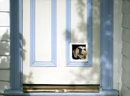 installing a new pet door guest post