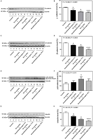 frontiers anesthesia and surgery impair blood brain barrier and  www frontiersin org