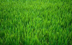 green grass field. 20 Green Grass Hd Wallpaper 7274 528 Field