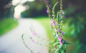 close up plant flower flowers pink blur background wallpaper widescreen full screen hd wallpapers fullscreen
