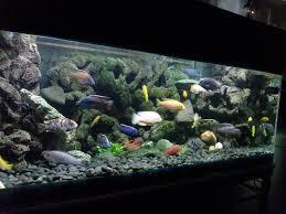 fish tank beautiful background diy images ideas turn