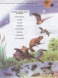 Движение живых организмов Одним из важнейших свойств живых организмов всего живого является размножение благодаря которому продолжается жизнь на нашей планете