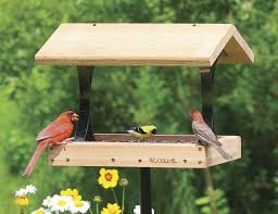 free bird feeder plans beautiful 77 best bird feeders and houses images on of 48