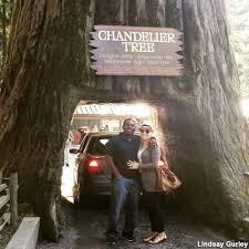 chandelier drive thru tree park