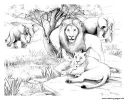 Small Picture adult africa lions Coloring pages Printable