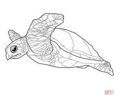 Small Picture Realistic Common Snapping Turtle coloring page Free Printable