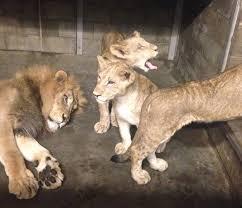 #GoodnightZoo – A Routine <b>Night</b> With Wild <b>Animals</b> | Cincinnati ...