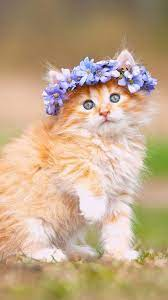 Love Cats Wallpapers - Top Free Love ...
