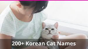 200 korean cat names plus meanings