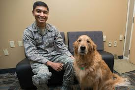 Sunlamps, comfort dogs to help intelligence analysts cope