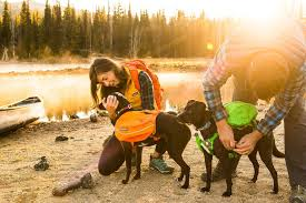 Fit Guide Get The Perfect Fit For Your Dog Ruffwear