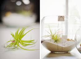gift idea diy air plant terrarium mstetson design throughout 18
