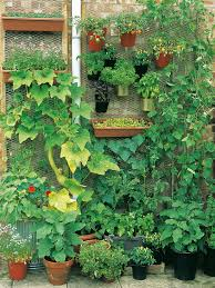 vertical vegetable garden is a great potential in small gardens increasing the space for growing a range of crops