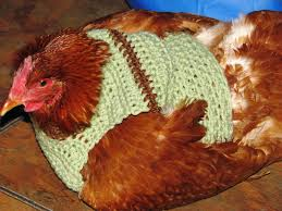 Crochet Chicken Pattern Interesting Design